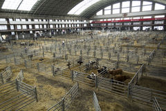 Torrelavega (Cantabria), Spain - September 10, 2014: National Cattle Fair Torrelavega Royalty Free Stock Image