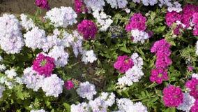Torremolinos -Botanic gardens-Molino del Inca-Andalusia Royalty Free Stock Photo
