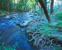 Torrens river in the Adelaide Hills. South Australia. The upper reaches of the Torrens river in the Adelaide Hills. South Australia royalty free stock images