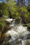 Torrent of rapids near Lake Prespa, Greece Royalty Free Stock Photography