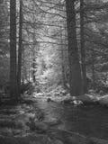 Torrente en una madera de picea-árboles Imágenes de archivo libres de regalías
