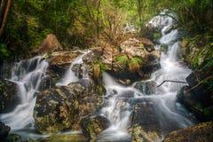 Torrente entre a floresta úmida atlântica Foto de Stock