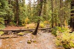 Torrente montano attraverso i pini in grande canyon del pioppo Fotografia Stock Libera da Diritti