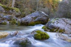 Torrente montano con chiara acqua che entra fra i massi nella foresta di autunno fotografie stock libere da diritti