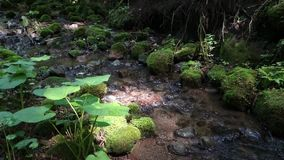 Torrente montano nel piccolo corso d'acqua della foresta in montagna archivi video