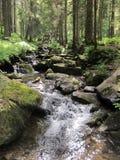 Torrente montano nella foresta Fotografie Stock