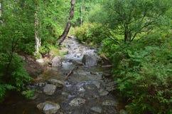 Torrente montano nella foresta Immagini Stock Libere da Diritti