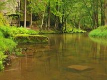 Torrente montano nella foresta fresca delle foglie verdi dopo il giorno piovoso.  Immagine Stock Libera da Diritti