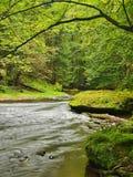 Torrente montano nella foresta fresca delle foglie verdi dopo il giorno piovoso.  Immagini Stock Libere da Diritti