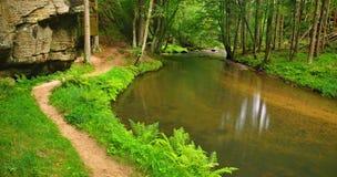 Torrente montano nella foresta fresca delle foglie verdi dopo il giorno piovoso.  Fotografia Stock Libera da Diritti