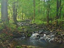 Torrente montano nella foresta fresca delle foglie verdi dopo il giorno piovoso.   Fotografia Stock