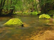 Torrente montano nella foresta fresca delle foglie verdi dopo il giorno piovoso. Primi colori di autunno nei raggi del sole di ser Fotografie Stock Libere da Diritti