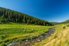 Torrente montano nelle alpi di Transylvanian Immagini Stock