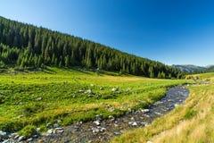 Torrente montano nelle alpi di Transylvanian Fotografia Stock Libera da Diritti