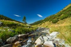 Torrente montano nelle alpi di Transylvanian Fotografia Stock