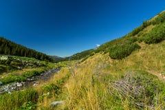 Torrente montano nelle alpi di Transylvanian Immagine Stock