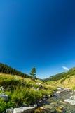 Torrente montano nelle alpi di Transylvanian Fotografie Stock Libere da Diritti
