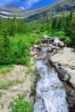 Torrente montano su un'alta traccia alpina in Glacier National Park Fotografia Stock