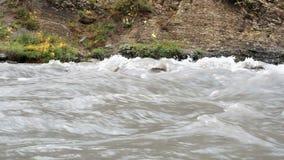 Torrente natural bonita de um rio tormentoso da montanha Rio enlameado da inundação repentina apressa o rio que raging água rapid video estoque
