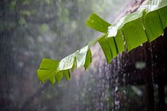 Torrential rain in the tropical rainfores Stock Image