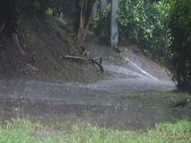 Torrential rainfall in the tropics stock video footage