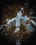 Torres de Petronas de la selva foto de archivo