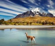 torres del Paine国家公园,智利 免版税图库摄影