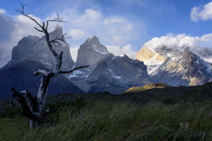 Torres del Paine εθνικό πάρκο, Παταγωνία, Χιλή Στοκ εικόνες με δικαίωμα ελεύθερης χρήσης