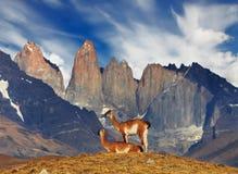 Torres del Paine, Патагония, Чили Стоковые Фото