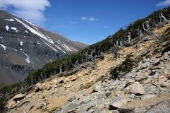 Torres del Paine Fotografia de Stock