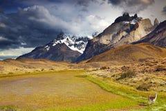 Torres del Paine, Чили Стоковое Фото