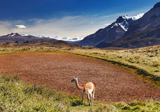 Torres del Paine, Chile Royalty Free Stock Image