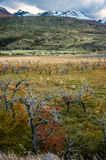 Torres del Paine National Park in the Autumn Royalty Free Stock Images