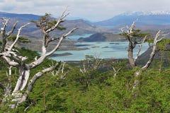 A Torres del Paine National Park - Chile - Landscape Stock Images