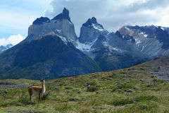Torres del Paine National Park 12. `The Cuernos` in the beautiful park Torres del Paine in Southern Patagonia, Chili stock photos