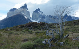 Torres del Paine National Park 13 Stock Images