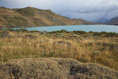 Torres del Paine National Park, Patagonia, Chile. Low lying plants and grasses overlooking the blue waters of Rio Paine in Torres del Paine National Park Stock Photography