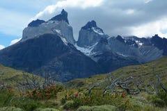 Torres del Paine nationalpark 11 Royaltyfri Foto
