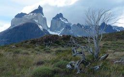 Torres del Paine nationalpark 13 Arkivbilder