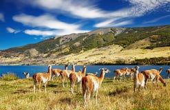 Torres del Paine, Patagonia, Chile Stock Photos
