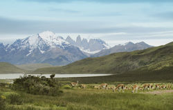 Torres del Paine pieken chili 3d zeer mooie driedimensionele illustratie, cijfer Stock Afbeeldingen