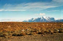 Torres del Paine/Sydamerika Royaltyfria Bilder