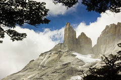Torres del paine towers in patagonia. With trees edging Royalty Free Stock Photo