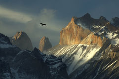 torres du Chili condor del paine photo stock