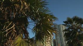 Torres e palmeiras, Vancôver filme