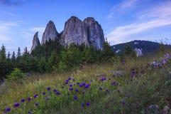 Torres y flores rocosas fotos de archivo