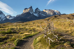 Torresdel Paine royalty free stock photo