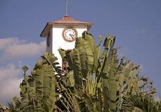 Torretta di orologio con le foglie di palma immagine stock