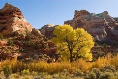 Torrette del canyon Immagine Stock