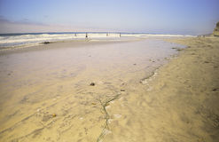 Torrey Pine国家公园海滩,加利福尼亚 免版税库存照片